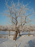 冷淡的冬天 库存图片