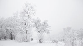 冷淡的冬日在公园 免版税图库摄影