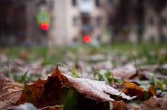 冷淡的叶子和草 库存图片