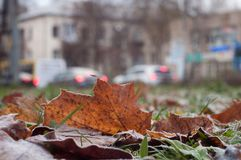 冷淡的叶子和草 免版税图库摄影