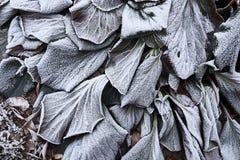 冷淡的叶子背景 免版税库存照片