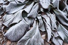 冷淡的叶子背景 免版税库存图片