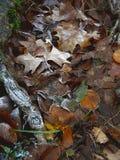 冷淡的叶子1 免版税库存照片