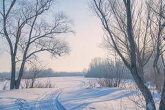 冷淡的天在森林沼地的森林 库存照片