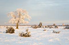 冷淡的孑然树在第一早晨阳光下 免版税库存照片
