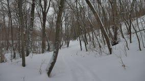 冷淡的干燥自然树枝冬天风景在多雪的户外森林俄罗斯 股票录像