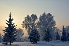冷淡的日落 图库摄影