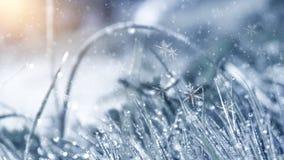 冷淡的早晨冬天 冬天雪背景,蓝色颜色,雪花,阳光,宏指令 免版税图库摄影