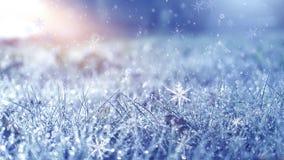 冷淡的早晨冬天 冬天雪背景,蓝色颜色,雪花,阳光,宏指令 免版税库存图片
