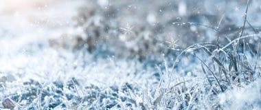 冷淡的早晨冬天 冬天雪背景,蓝色颜色,雪花,阳光,宏指令 库存照片