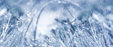 冷淡的早晨冬天 冬天雪背景,蓝色颜色,雪花,阳光,宏指令 图库摄影