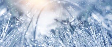 冷淡的早晨冬天 冬天雪背景,蓝色颜色,雪花,阳光,宏指令 皇族释放例证