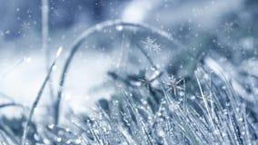 冷淡的早晨冬天 冬天雪背景,蓝色颜色,雪花,阳光,宏指令 库存例证