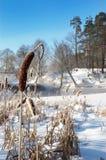 冷淡的早晨冬天 免版税库存图片