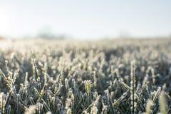 冷淡的早晨在12月上旬 图库摄影