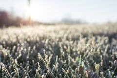 冷淡的早晨日出在12月上旬 库存图片