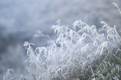 冷淡的早晨 在霜的草有被弄脏的背景 库存图片