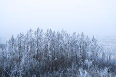 冷淡的早晨 在霜的草有被弄脏的背景 免版税图库摄影