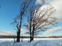 冷淡的晴天在多雪的乡下 一个老橡树的不生叶的分支在软的蓝天的看起来象一根花梢鞋带 免版税库存图片