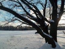 冷淡的晴天在多雪的乡下 一个老橡树的不生叶的分支在软的蓝天的看起来象一根花梢鞋带 库存照片