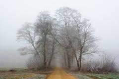 冷淡的有薄雾的秋天早晨 免版税库存图片