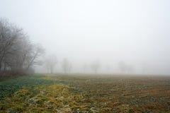 冷淡的有薄雾的秋天早晨 免版税库存照片