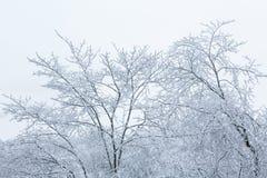 冷淡的树上面 免版税库存图片