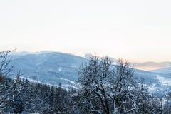 冷淡的树冬天风景在冬天森林里冬天早晨 与多雪的冬天树的冬天风景 库存图片