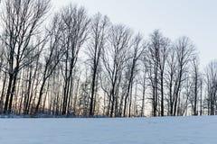 冷淡的树冬天风景在冬天森林里冬天早晨 与多雪的冬天树的冬天风景 免版税库存图片