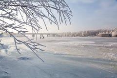 冷淡的树冬天风景,白色雪在城市公园 包括的雪结构树 图库摄影