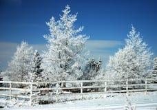 冷淡的树和风景降雪-大农场篱芭 库存图片