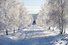 冷淡的桦树 免版税图库摄影