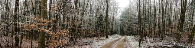 冷淡的横向冬天 库存图片