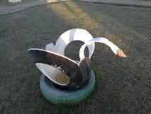冷淡的生态天鹅2 免版税库存照片