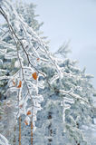 冷淡的积雪的叶子 免版税库存图片
