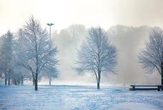 冷淡的结构树冬天横向  免版税库存图片