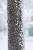 冷淡的结构树 免版税图库摄影