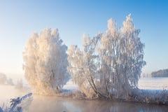 冷淡的自然风景在晴朗的冬天早晨 太阳照亮在河岸的多雪的树 免版税库存图片