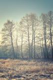 冷淡的自然风景 免版税图库摄影