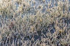 冷淡的草叶在冰上的从关闭 库存照片
