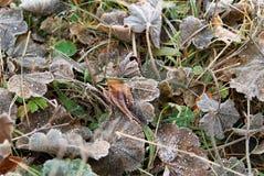 冷淡的草和foliages 库存照片
