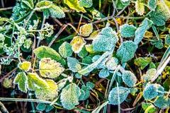 冷淡的草甸叶子 免版税库存照片