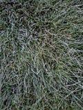 冷淡的草 库存图片