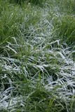 冷淡的草 库存照片