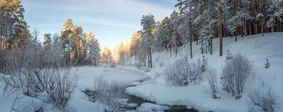 冷淡的晴天在乌拉尔有一条冻河的,俄罗斯一个森林, 图库摄影