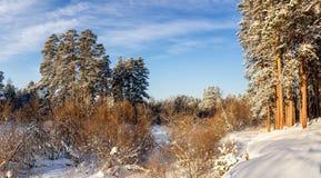 冷淡的晴天在乌拉尔有一条冻河的,俄罗斯一个森林 库存图片