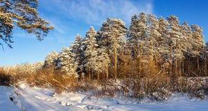 冷淡的晴天在乌拉尔有一条冻河的,俄罗斯一个森林 免版税库存图片