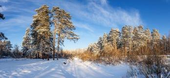 冷淡的晴天在乌拉尔有一条冻河的,俄罗斯一个森林 库存照片