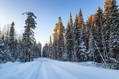 冷淡的晴天在乌拉尔有土路的,俄罗斯, 1月一个森林 免版税库存图片