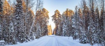 冷淡的晴天在乌拉尔有土路的,俄罗斯, 1月一个森林 库存图片